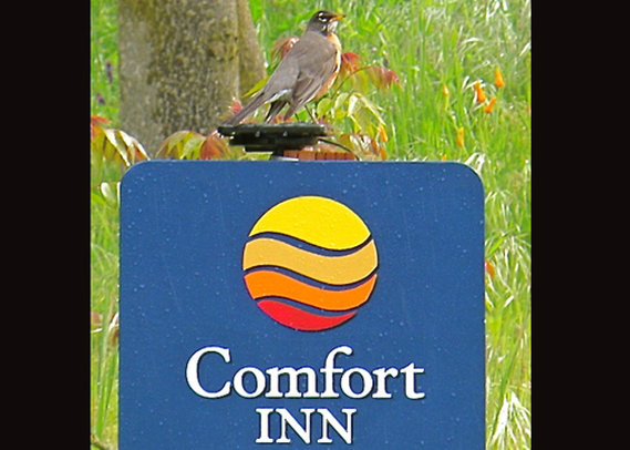 Comfort Inn Yosemite Valley Gateway